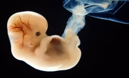 """Little biological life' at 6 weeks"